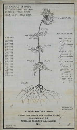 A diagram of a flower, from roots to bloom, the roots labeled as Bacon, the blom as Shakespeare, and other Elizabethan writers labeled for the leaves on the stem. The  biliteral alphabet code is on the left side, and a legend on the right.